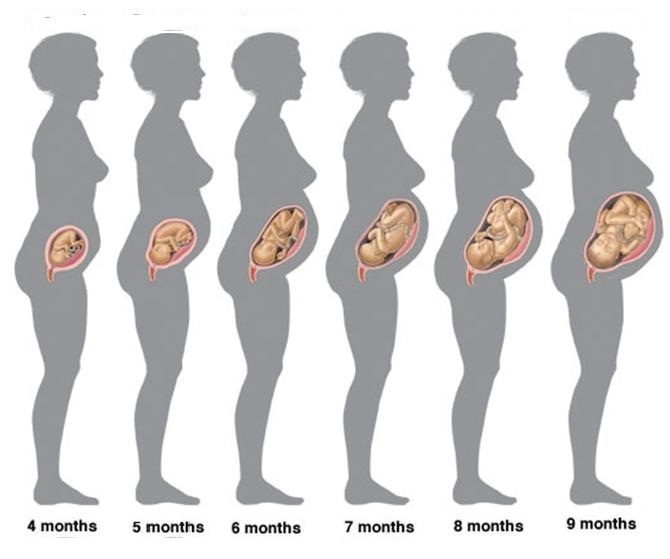stages-of-pregnancy