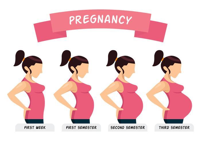 vector-pregnancy-illustration