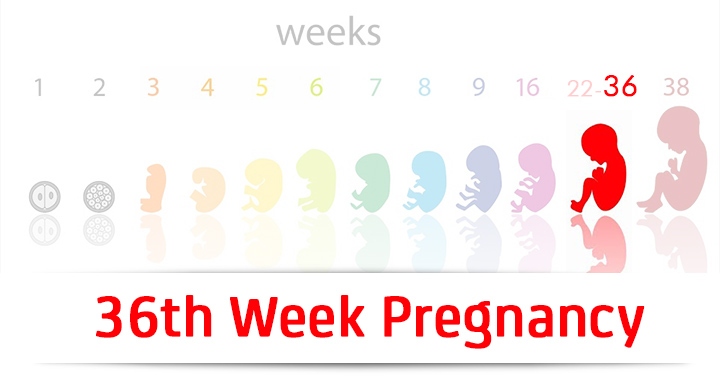 36th-week-pregnancy