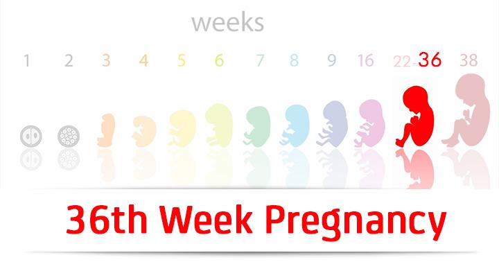 36th-week-pregnancy